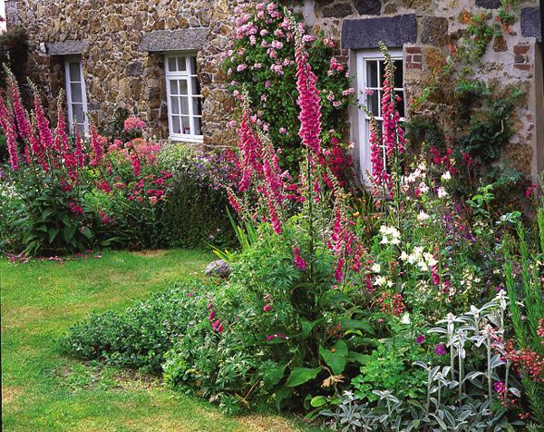 Krása divokej záhrady - digitalis,alebo náprstník je nádherný vysoký kvet krášliaci naše záhrady