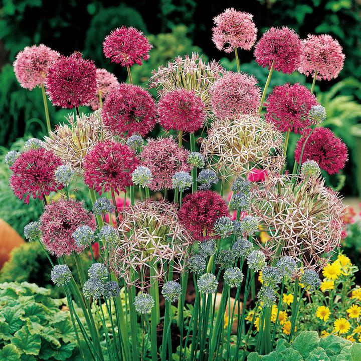 Krása divokej záhrady - velmi efektne posobia aj pri odkvitaní