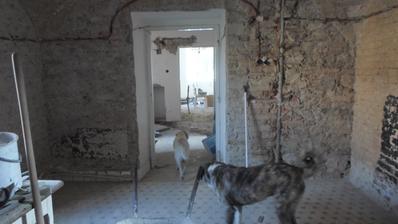pohled z ložnice na chodbu a do obýváku, psiska to museli pořádně okouknout :-D