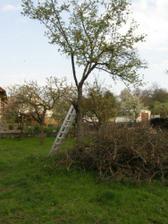 výrub stromov 1