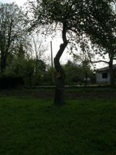 výrub stromov 3
