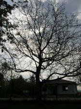 výrub stromov 4