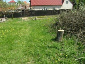 výrub stromov 8
