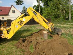 vykopávanie koreňov