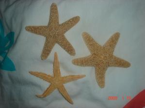 nase starfish