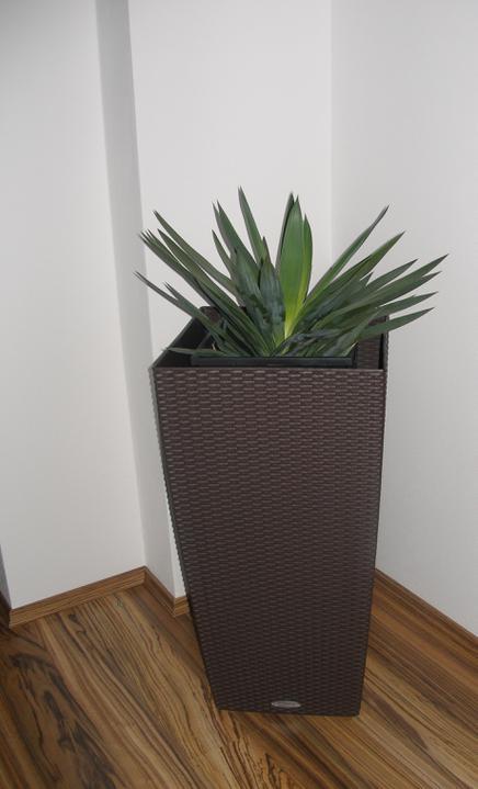 SKORO HOTOVO - nové květináče, jsou mnohem větší :-)