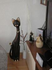 moje mačky v obývačke