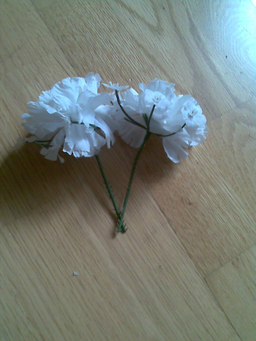 biele kyticky  - Obrázok č. 1