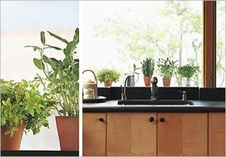 Samolepky na sklo - Květiny různé