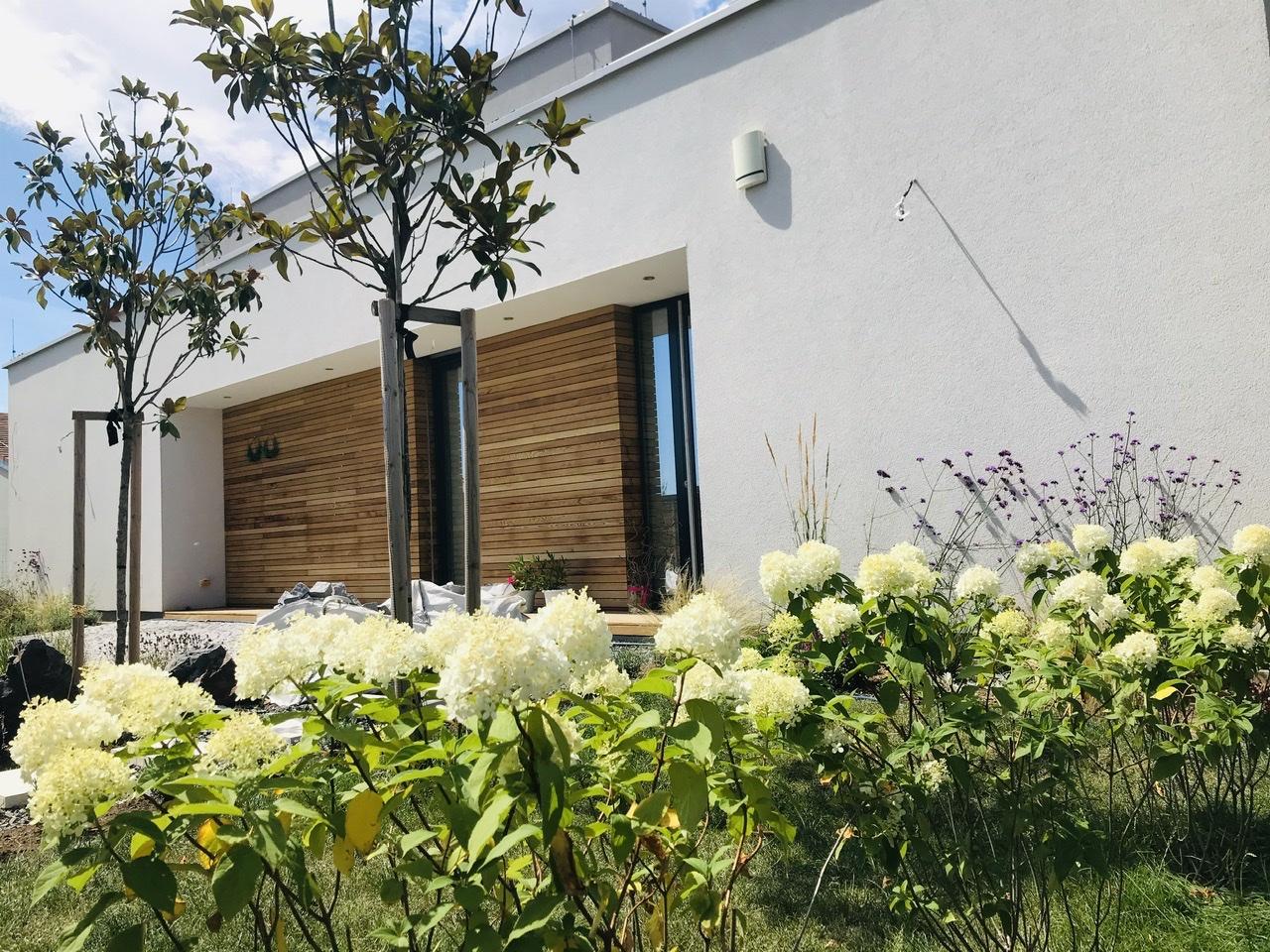 Naše L-ko - začiatok 4. roku bývania - Predzahrádka - biele hortenzie mesiac po vysadení lemujú lavú i pravu stranu predzahrádky