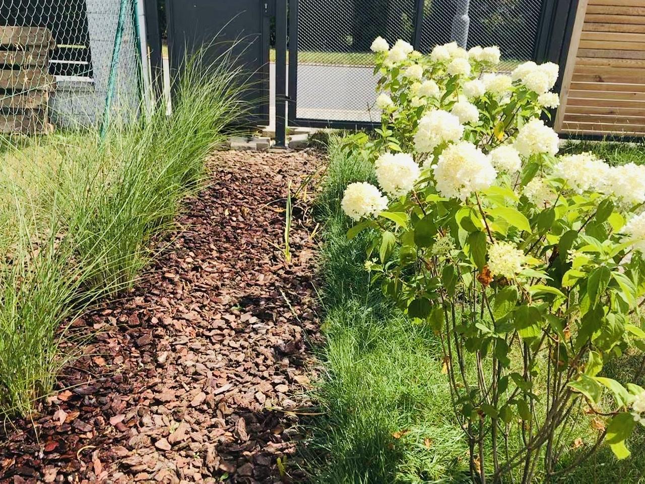 Naše L-ko - začiatok 4. roku bývania - U plotu rastie 4 m pruh - mladá ozdobnica čínska , tento pruh by sa mal prepojit s pruhom hortenzii. Travny drn pod hortenziami odstranim až na jar. Dali sme ich rychlo do zeme aby sa stihli zakorenit