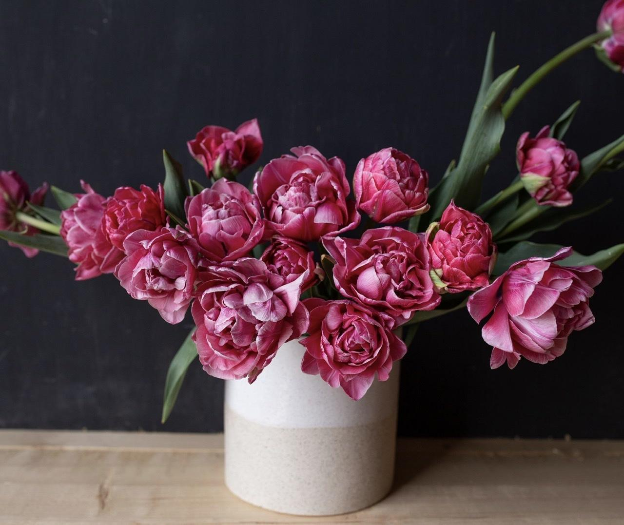 Naše L-ko - začiatok 4. roku bývania - tulipán č.1 -  plnokvetý, teplejšia ružová