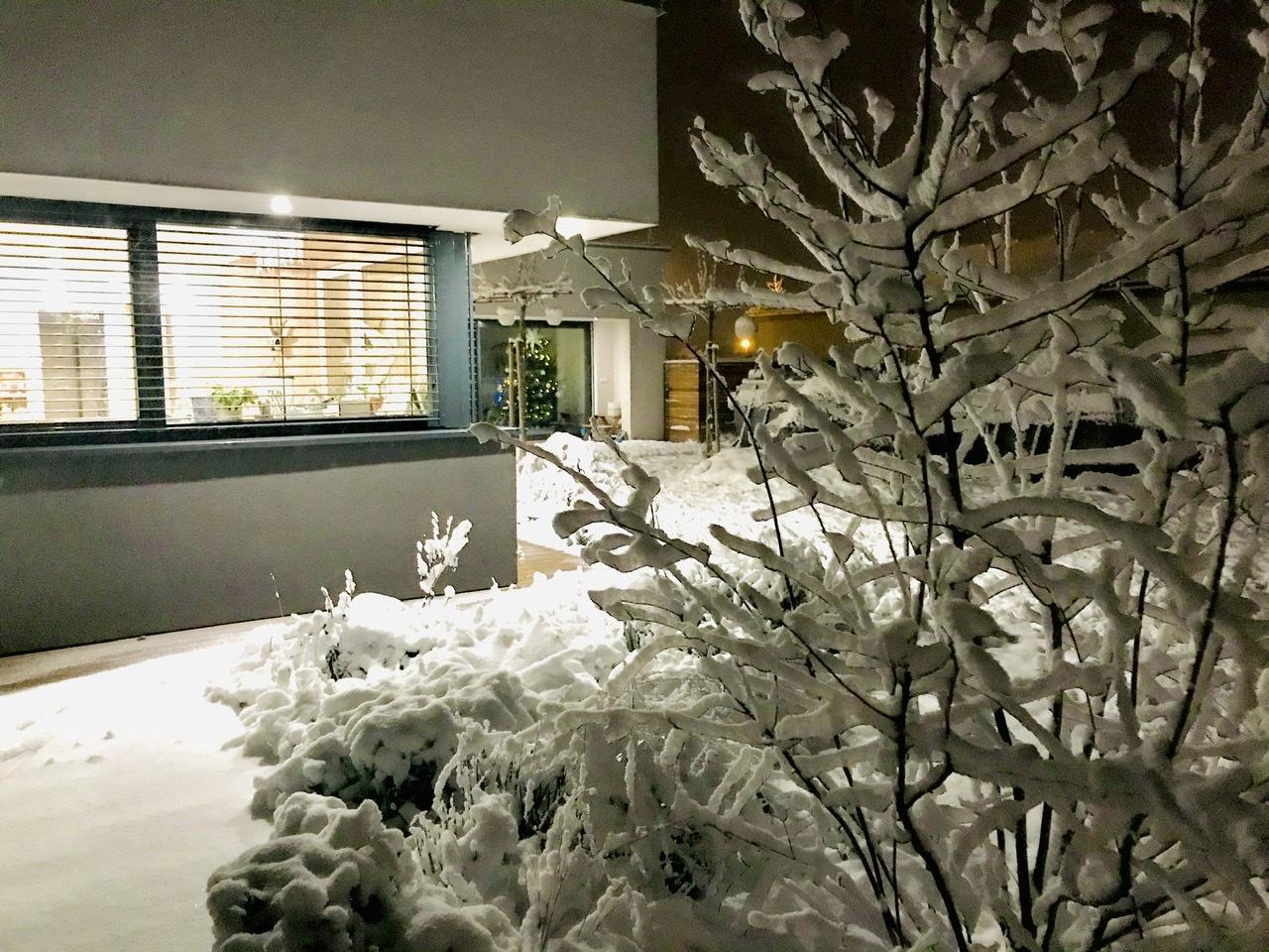 Naše L-ko - 2021 - stále dokončujeme - večerná zahrada pod snehom a mladý muchovník