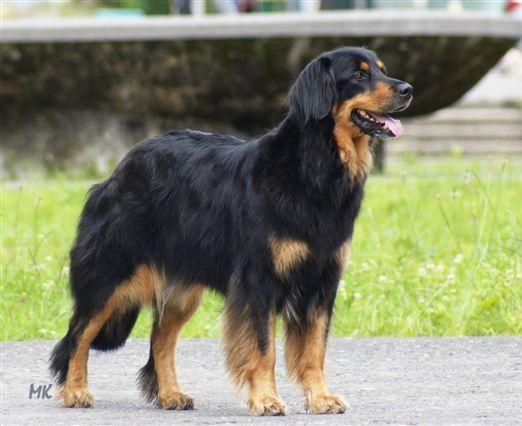 Chcela by som psa... - Obrázok č. 2