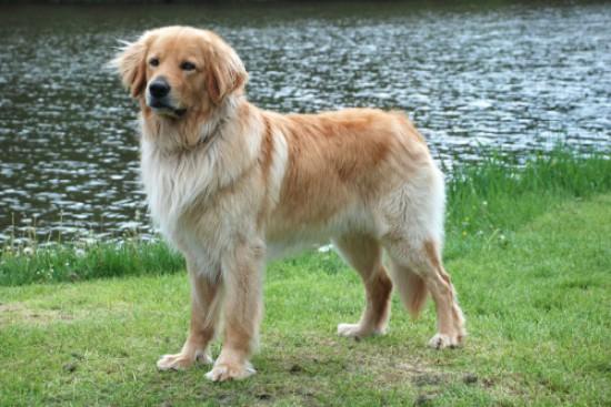 Chcela by som psa... - Obrázok č. 3