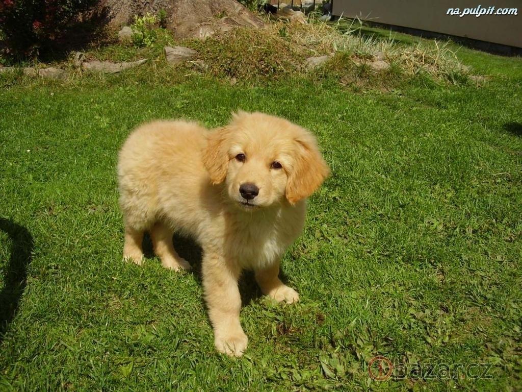 Chcela by som psa... - Obrázok č. 4