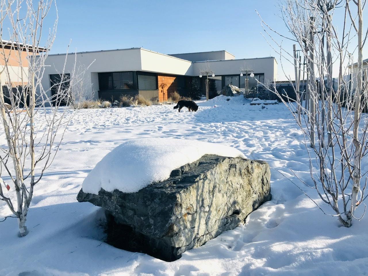 Naše L-ko - 2021 - stále dokončujeme - Domček z dialky - posledné zasnežené fotky  - u kameňa mladé briezky