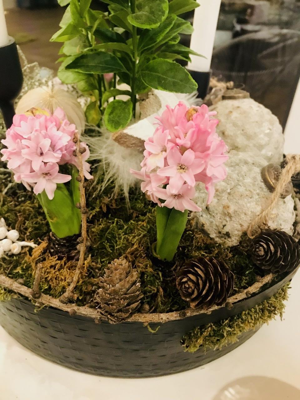 Naše L-ko - 2021 - stále dokončujeme - pred časom vykvitli ešte i ružové hyacinty