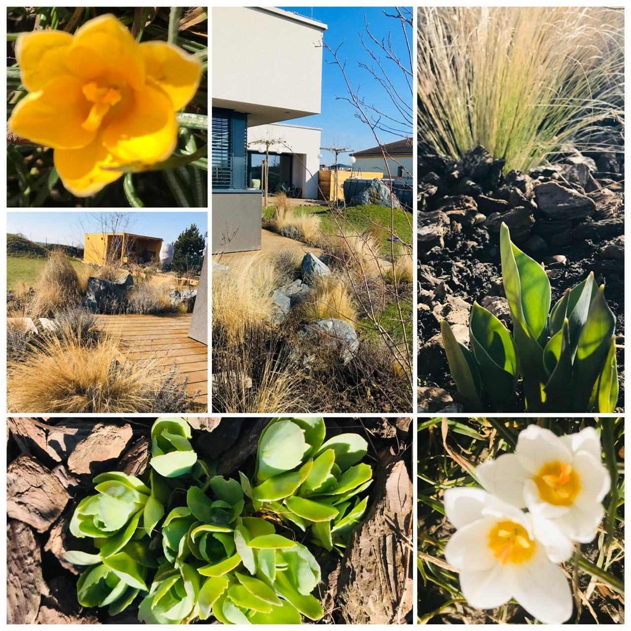 Naše L-ko - 2021 - stále dokončujeme - 🌼🌼🌼 jar sa vkrádá do záhradky, vykúkajú prvé kvietky krokusov, rašia tulipány, hyacinty, narcisy, rozchodníky 🌼🌼🌼