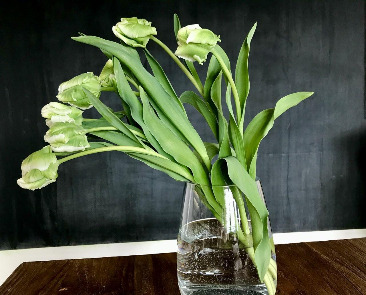 Naše L-ko - 2021 - stále dokončujeme - Biele tulipány super parrot z Loukykvet