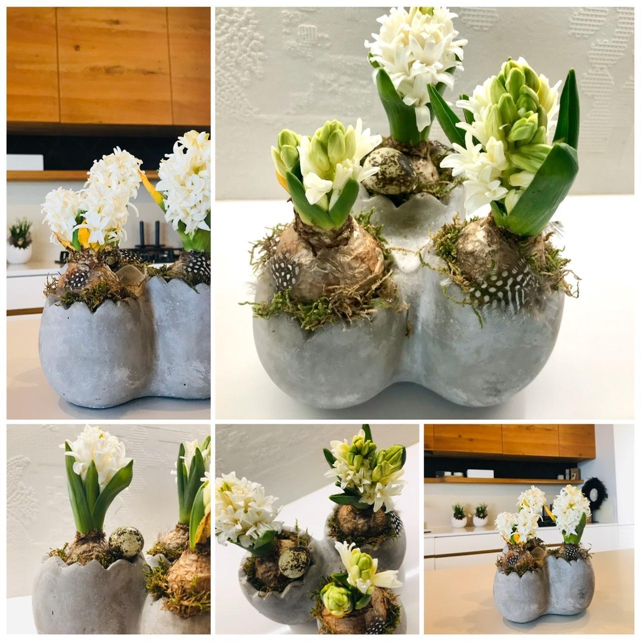 Naše L-ko - 2021 - stále dokončujeme - Biele hyacinty a betonové kvetináčky