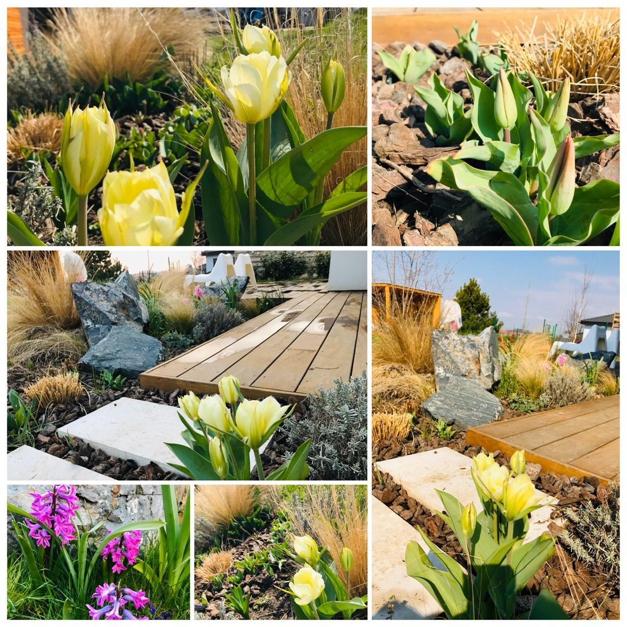 Naše L-ko - 2021 - stále dokončujeme - Začínajú sa otvárať prvé tulipány - prajem krásné slnečné ráno