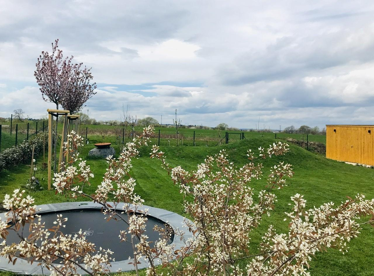 Naše L-ko - 2021 - stále dokončujeme - Zapustená trampolína a minulý rok sadené 2 nové mladé muchovníky - začínajú u nás prvý krát kvitnúť. Tiež budu presadené budu z bočnej zadnej časti bazéna.
