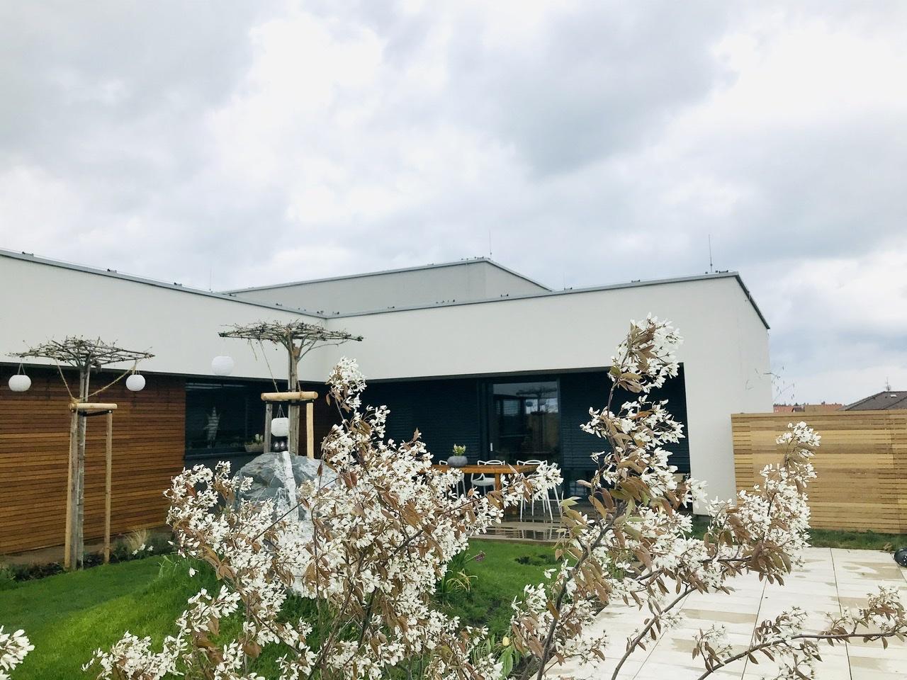 Naše L-ko - 2021 - stále dokončujeme - biele kvety muchovníka u terasy