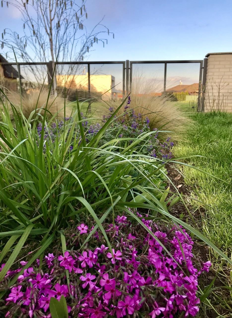 Naše L-ko - 2021 - stále dokončujeme - trvalky sadené minulú jar začínajú ožívať