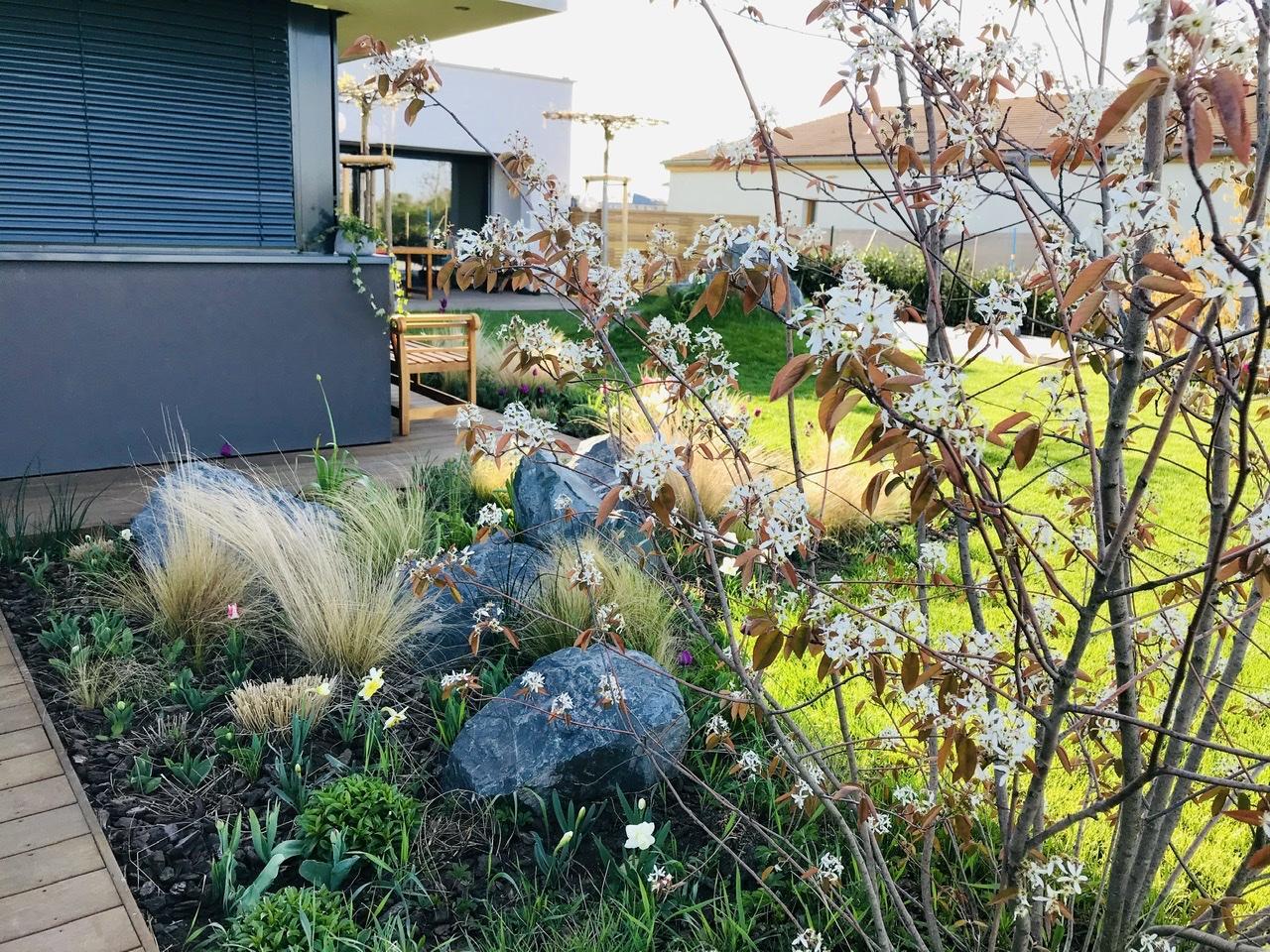 Naše L-ko - 2021 - stále dokončujeme - U zadnej terasy - záhon a muchovník v kvete. Pozdlž susedného domu objednaných 12 kmienkovych stromkov s minikorunkami, pojdu ku plotu ku bazénu tak aby korunky boli nad živym plotom z bobkovišní a vytvorili zelenú kulisu