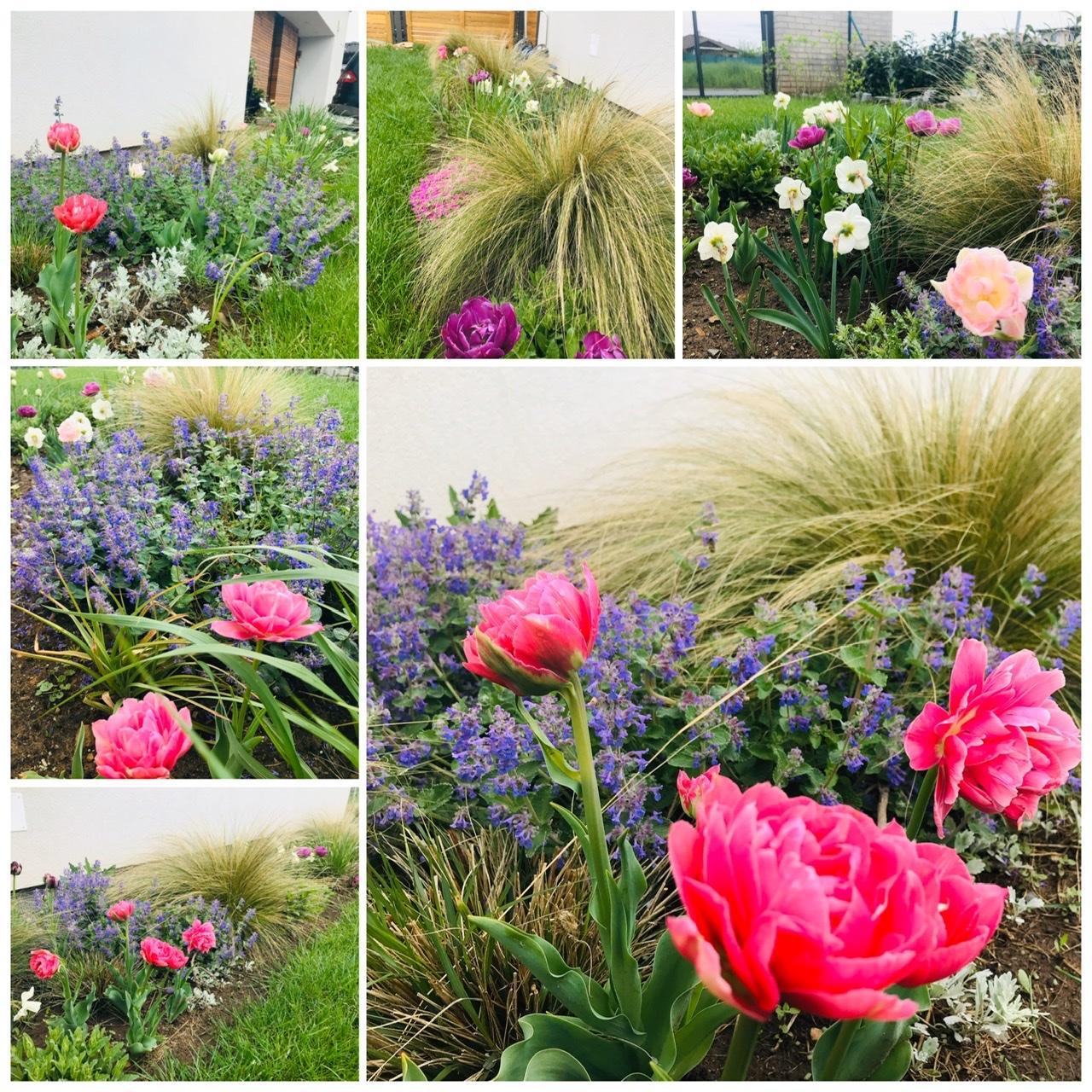 Naše L-ko - 2021 - stále dokončujeme - kvetinové záhony v predzahrádke okolo domu
