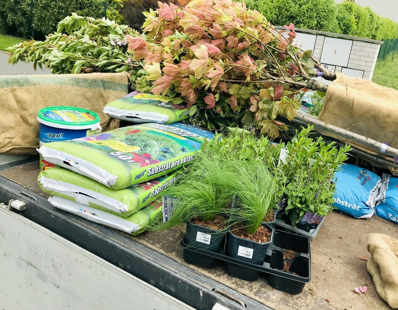 Naše L-ko - 2021 - stále dokončujeme - Dorazilo 12 nových stromov do záhrady a tento rok uz pomenej asi 100 trvaliek, ktoré sa rozložia do nového záhona u bazéna a u zadnej časti ohniska. Na foto žiari krásny zakrslý javor ktorý mení listy ako chameleón od lososovej, zlenkavej a bežovej