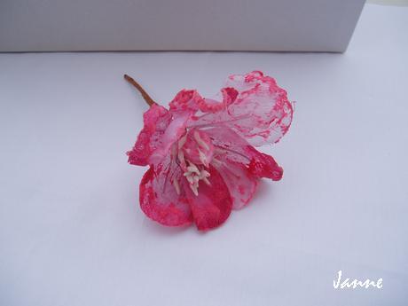 květ magnolie-fuchsiová - Obrázek č. 1