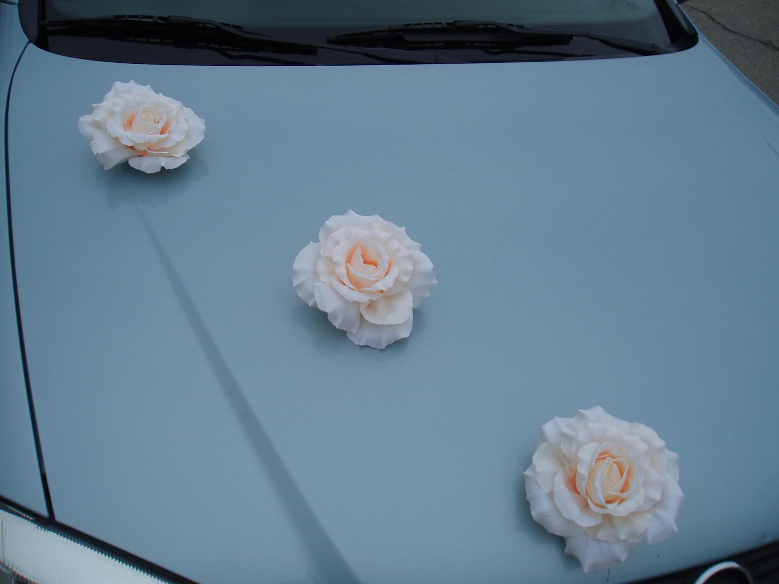 květ růže s přísavkou - Obrázek č. 1