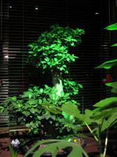 použitie zeleného filtra v z.záhrade