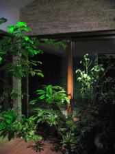 zimná záhrada večer