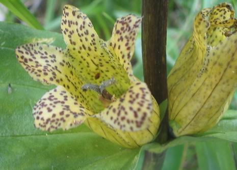 Katalóg kvetov - Horec