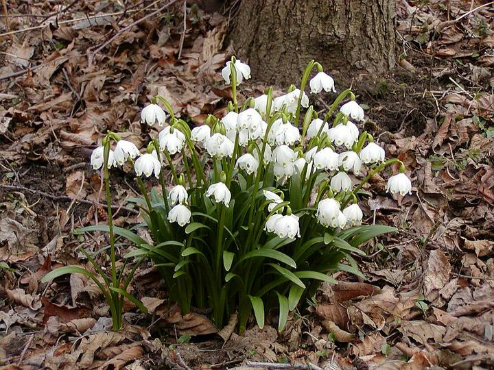 Katalóg kvetov - Bleduľa