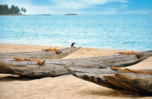 Srí Lanka - východní strana pro svatební cestu v létě - Obrázek č. 10