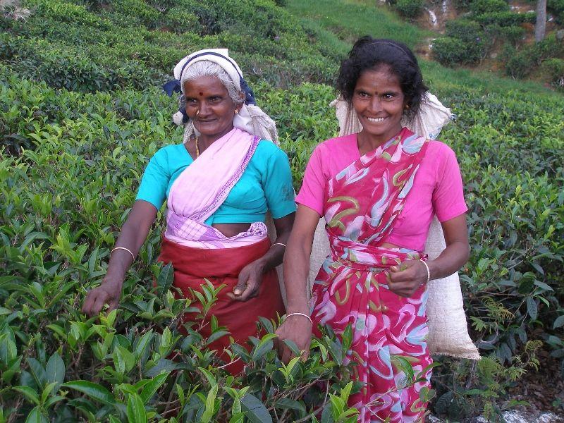 Srí Lanka - východní strana pro svatební cestu v létě - Obrázek č. 13