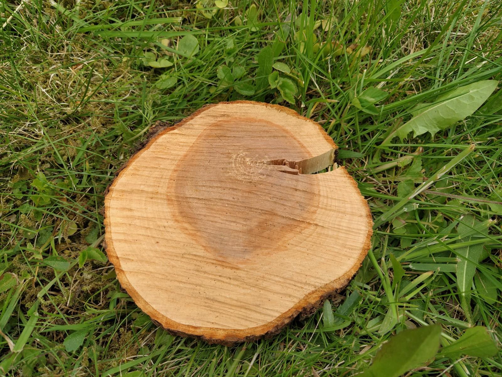 Dřevěné kulatiny/podnosy (průměr cca 13-15 cm) - Obrázek č. 1