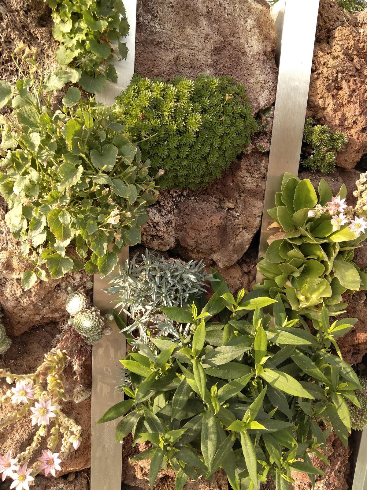 Zvislá zeleň na terase či balkóne - 2 measiace po zalozeni