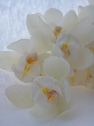 Same krasne veci :) - biele orchidey :)