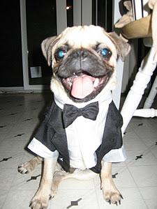 Svadobné mopsíky...alebo Bez psíka sa nevydávam :) - Obrázok č. 20