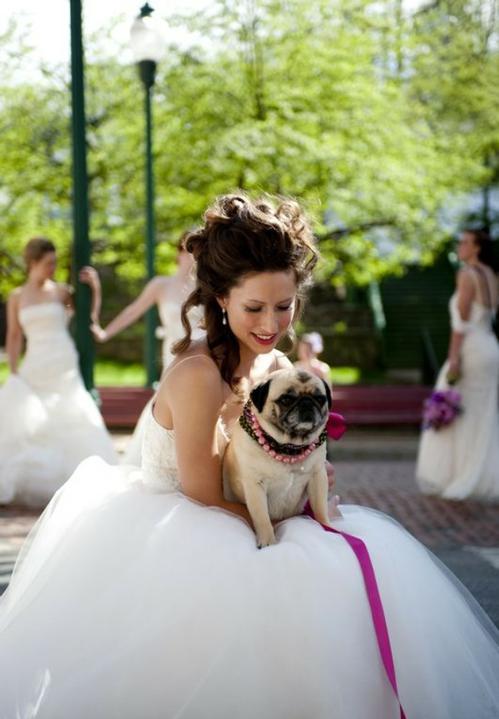 Svadobné mopsíky...alebo Bez psíka sa nevydávam :) - k fialovo ružovému ladeniu :)