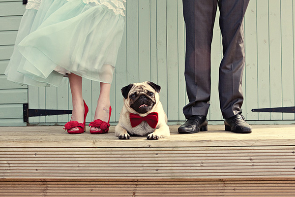 Svadobné mopsíky...alebo Bez psíka sa nevydávam :) - ladime s topánkami ...