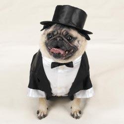 Svadobné mopsíky...alebo Bez psíka sa nevydávam :) - Obrázok č. 21