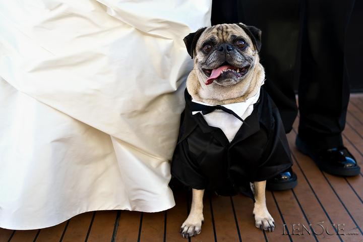 Svadobné mopsíky...alebo Bez psíka sa nevydávam :) - Obrázok č. 15