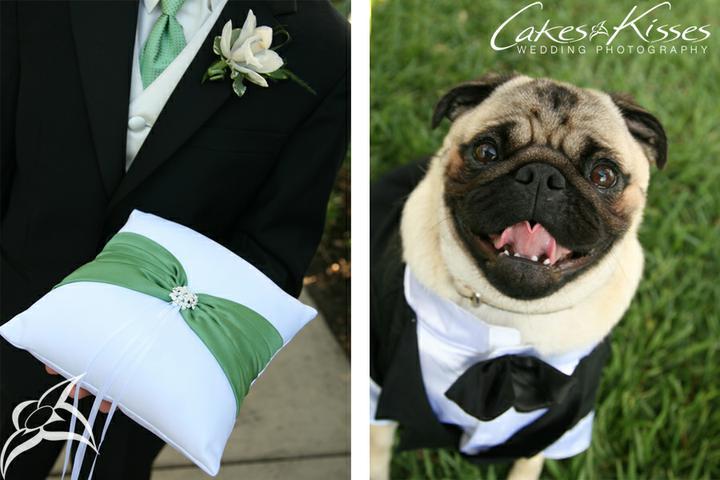 Svadobné mopsíky...alebo Bez psíka sa nevydávam :) - mladý pán ženích :)))