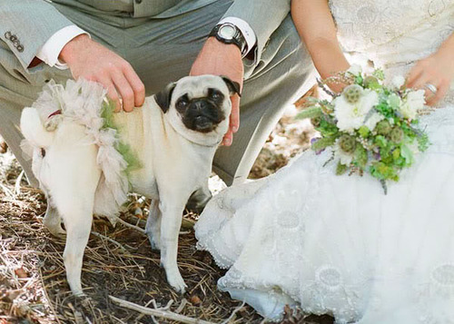 Svadobné mopsíky...alebo Bez psíka sa nevydávam :) - ladíme s kytickou...:)